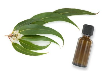 Eucalyptus d couvrez les vertus et bienfaits pour la sant for Antitussif maison
