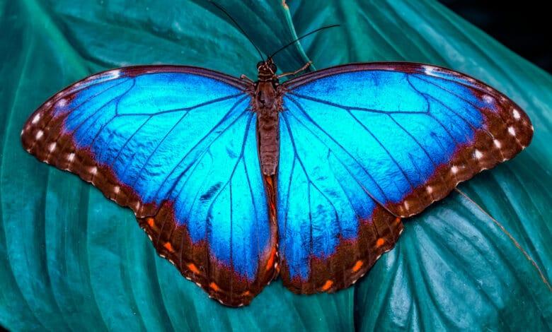 Macro-photos d'insectes étonnants
