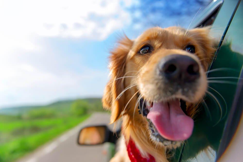 Photo of Anti douleur pour chien : les remèdes naturels