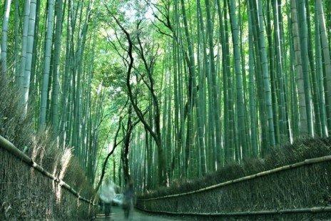 Bois de Bambou