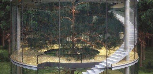 maison-autour-arbre