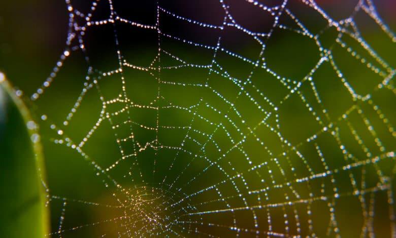 remède anti araignée