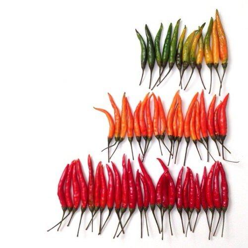 colorful-food-arrangement-photography-foodgradients-brit_010-1