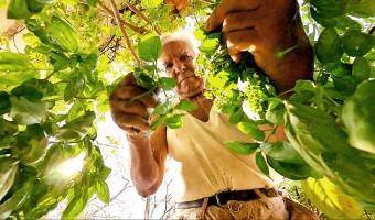 « Le potager de mon grand-père », loin de la fiction, la vie en vrai