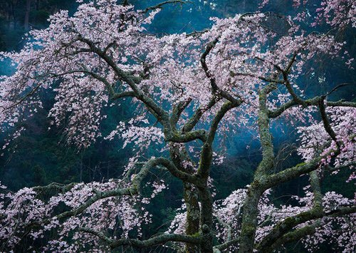 national-geographic-travel-photographer-of-the-year-cont_006