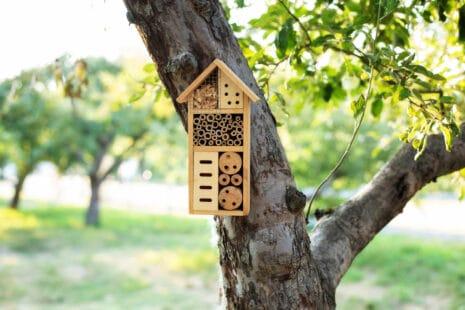 Hotel à insectes accroché dans un arbre