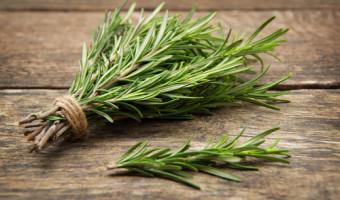 Le romarin, une herbe aromatique prometteuse