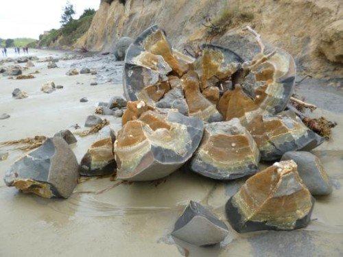 shattered-septarian-concretion