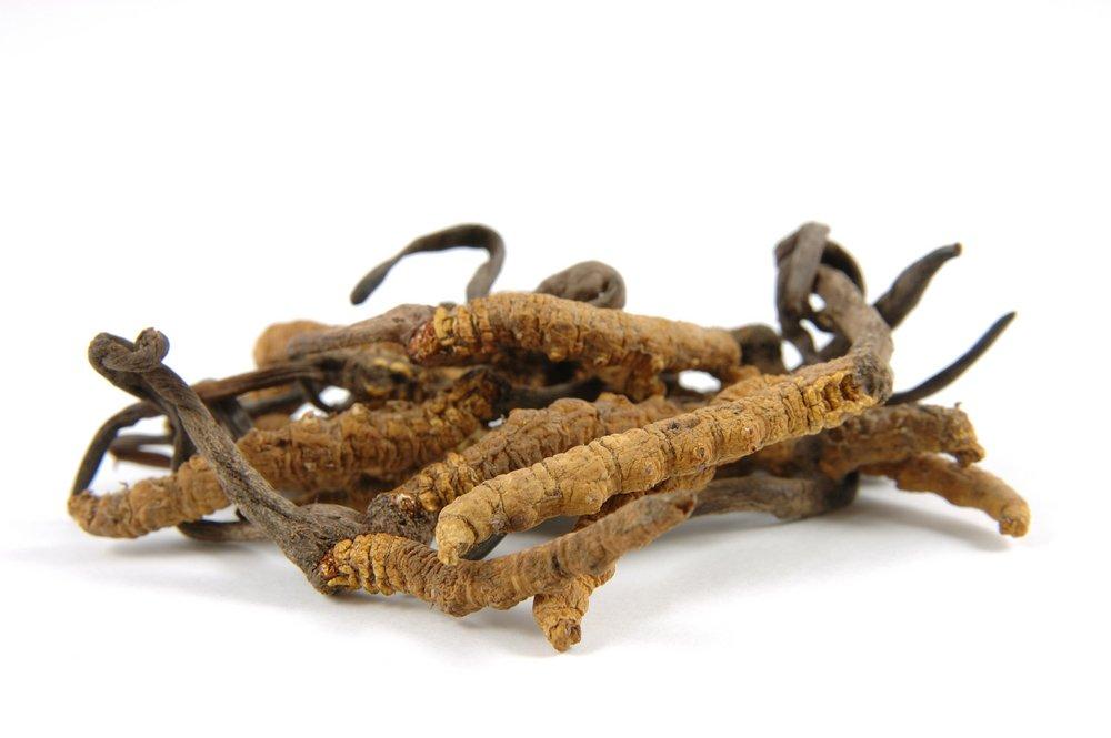 L'énergie vitale du champignon cordyceps, le champignon chenille