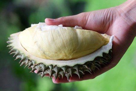 Le durion, le fruit odorant d'Asie