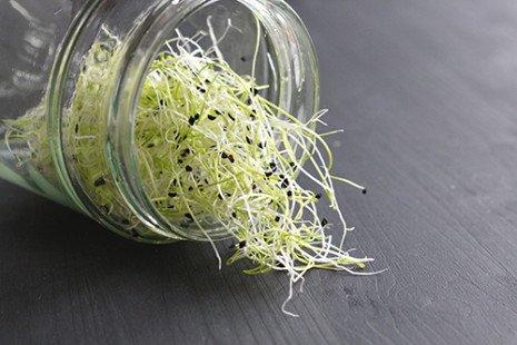 Faire ses graines germées à la maison : mode d'emploi