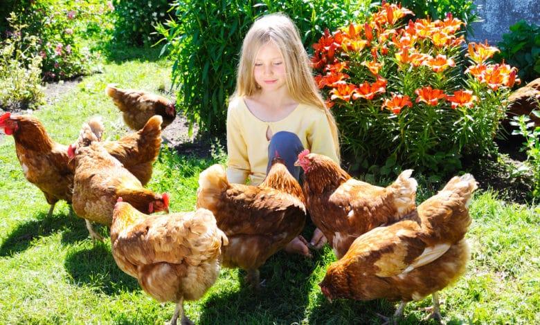 Élever des poules dans votre jardin