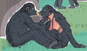 Vie amoureuse des animaux : mythe ou réalité ?
