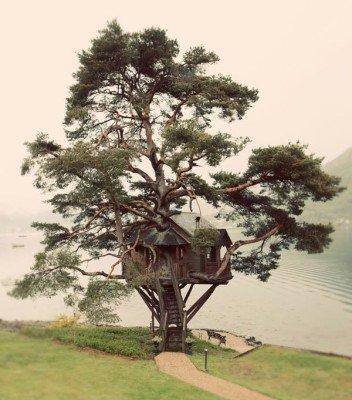 La cabane sur l'arbre ...