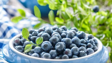Photo of Le bleuet, fruit antioxydant par excellence