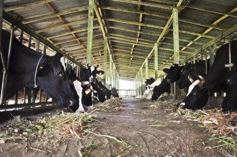 Des aliments nocifs pour la planète et pour nous-mêmes