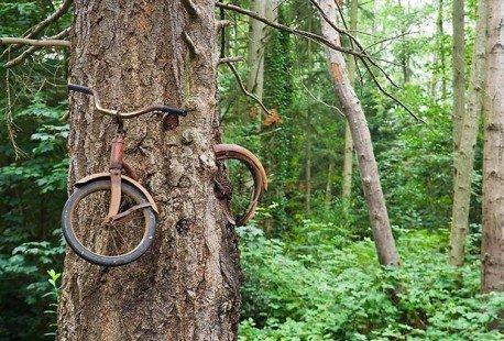 Un vélo dans l'arbre