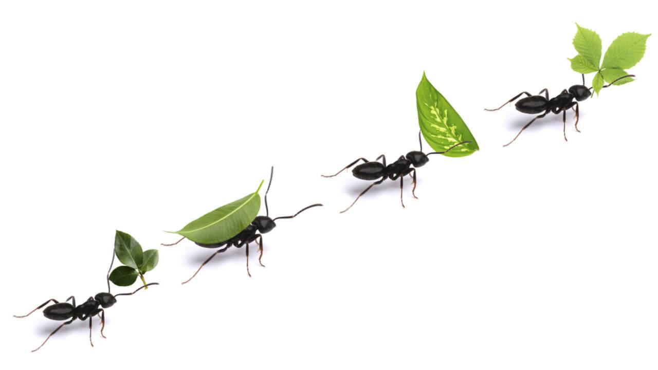 Eloigner Les Fourmis Au Jardin comment se débarrasser des fourmis avec des méthodes