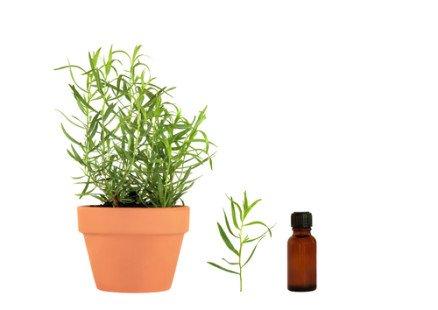 L'huile essentielle d'estragon : à avoir dans sa trousse à pharmacie !