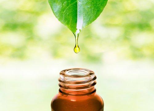L'huile essentielle de gaulthérie couchée, moins connue que l'aspirine et pourtant...