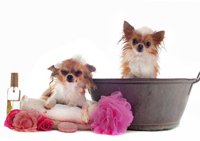 nettoyage de chiens et chats