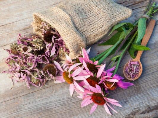 Bouquet d'échinacées et fleurs séchées, posés sur une table