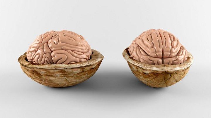 Théorie des signatures : quand les aliments guérissent les organes auxquels ils ressemblent
