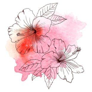 Dessin de fleur d'hibiscus