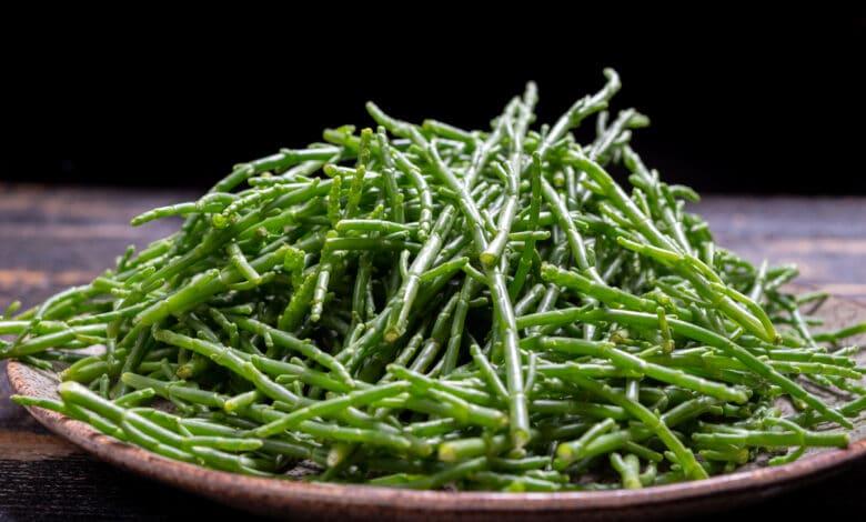 La salicorne n'est pas une algue