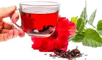 Tout sur les fleurs d'hibiscus et leurs propriétés aromatiques et pour la santé