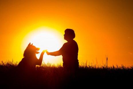 Akita Inu : découvrez cette race de chien japonais