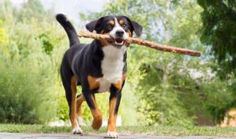 Race de chien : pour tout savoir sur nos compagnons