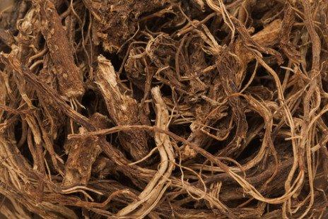 Santé au naturel : le coleus forskohlii, quésako ?
