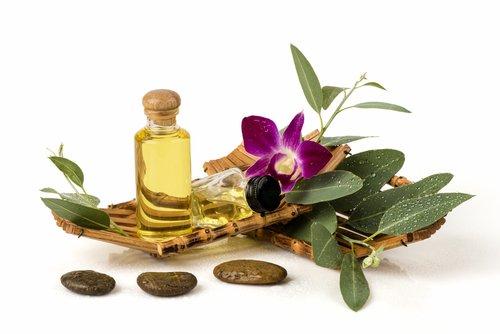 L'huile essentielle d'eucalyptus radié : pour toute la famille
