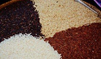 Zoom sur les multiples variétés de riz