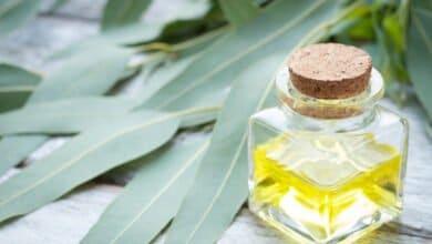 Photo of Huile essentielle d'eucalyptus radié : pour toute la famille