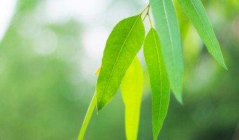 Vêtements écologiques à partir des fibres d'eucalyptus