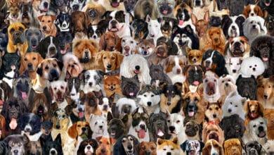 Photo of Race de chien : pour tout savoir sur nos compagnons