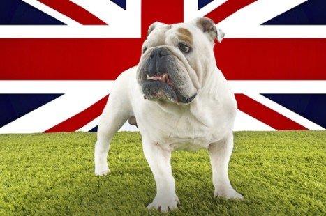 Bulldog : caractéristiques, santé, mode de vie et prix