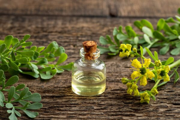Flacon d'huile essentielle de ruta graveolens posé sur une table en bois, feuilles