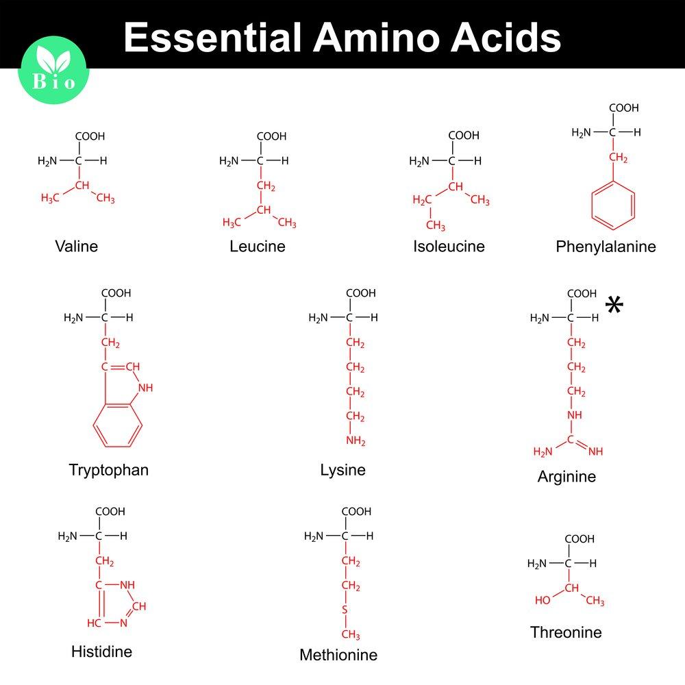 acides aminés essentiels