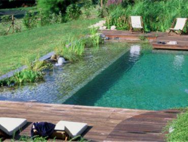 piscine naturelle cot dentretien aspect cologique et scurit