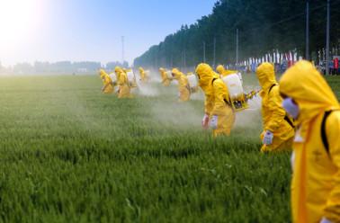 Pesticides : définition et 5 astuces pour les enlever des ...