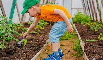 Potagers didactiques : jardins potagers pour enfants