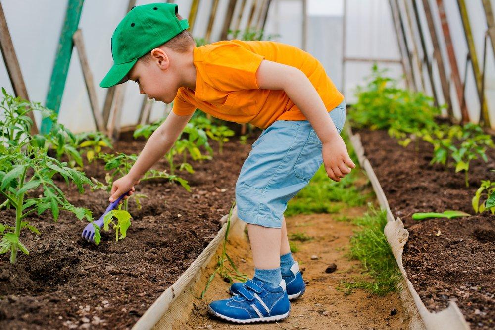 Photo of Potagers didactiques : jardins potagers pour enfants