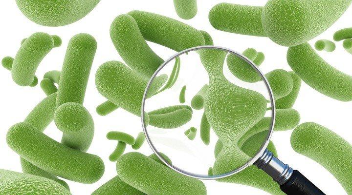 Les probiotiques, ces micro-organismes bénéfiques à notre organisme