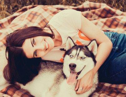 Husky, un chien affectueux