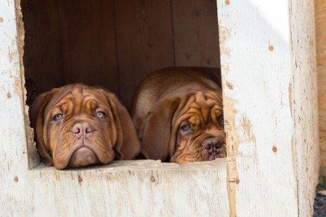 Niche pour chien : nos conseils