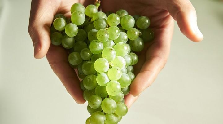 Le raisin, graine de détox et d'énergie