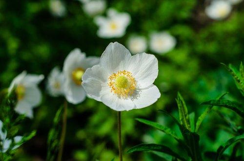 Des fleurs d'hiver